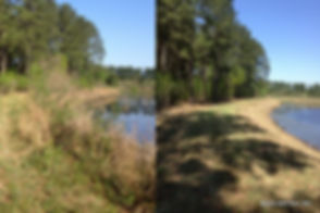 Bush Hog- Bush Hogging- Mowing- Tall Weeds- Overgrown Fields- Pasture Mowing- Residential Landscape-