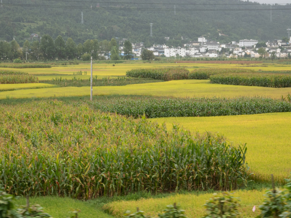 Fields in Southern China