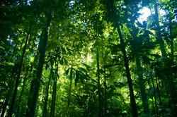 Proteção das Florestas