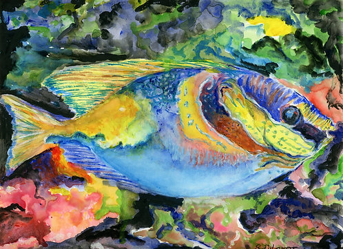 Colorful Fish (Premium Prints)