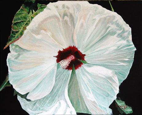 Hibiscus (Premium Prints)
