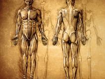 Mal de dos : le retour en grâce des fascias