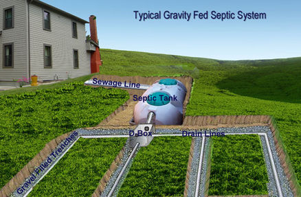 Gravity fed septic tank and septic drainfield