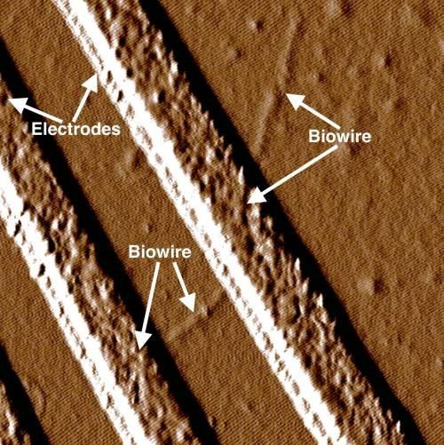 Cables eléctricos miles de veces más delgados que un cabello humano