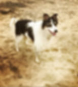 Dog walker Exmouth. Dog walker East Devon. Dog walker Budleigh Salterton. Sandy Paws and Waggy Tails Exmouth, dog walking Exmouth, dog walker Exmouth, dog walker Budleigh Salterton, dog walking East Devon, dog sitting Topsham, dog walking Topsham, dog wedding service Topsham, dog wedding East Devon, pet taxi Exmouth, dog taxi Exmouth, dog transport East Devon, cat sitting East Devon, cat feeding East Devon, puppy sitting Exmouth, puppy sitting East Devon Devon, dog sitting Budleigh Salterton, dog sitting Woodbury Salterton, dog walking Otterton, dog sitting Otterton, dog walking Yettington, dog walking Lympstone, dog walking Exton,