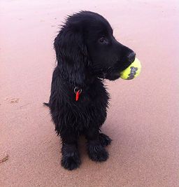 Dog walker Exmouth. Dog walker Budleigh Salterton. Sandy Paws and Waggy Tails. Dog walking, dog running, Exmouth Beach, Devon, pet services, pet sitting, Exmouth local business