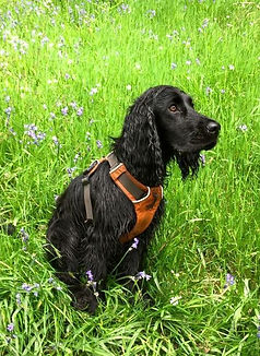 Dog walker Exmouth. Dog walker East Devon. Dog walker Topsham. Sandy Paws and Waggy Tails Exmouth. Dog walking Exmouth, pet sitting Exmouth, dog walking East Devon, pet sitting East Devon, dog running, dog walker Woodbury Common, dog walker Exmouth, dog walker Budleigh Salterton, dog walker Otterton, dog walker Lympstone, dog walking Devon, East Devon pet services, pet sitting Topsahm, dog walker Topsham