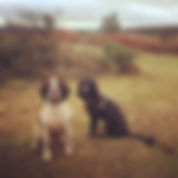 Sandy Paws and Waggy Tails Exmouth Dog Walker East Devon Dog Walking