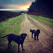 Sandy Paws and Waggy Tails Exmouth Dog Walker East Devon Dog Walking Dog Walker Woodbury Common