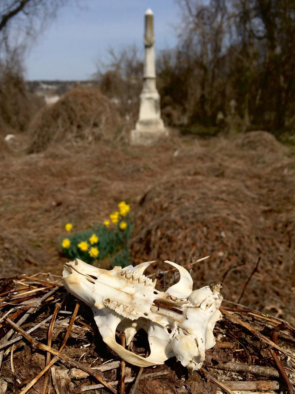 """""""Abandoned Graveyard"""""""