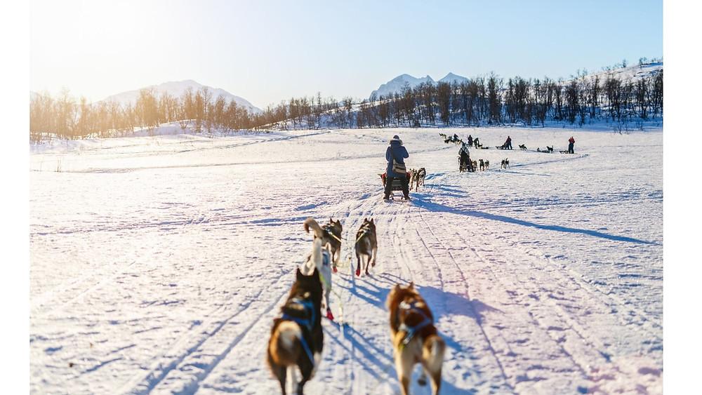 Hundeschlitten-Deutschland-Erfahrungen-Husky-Tour