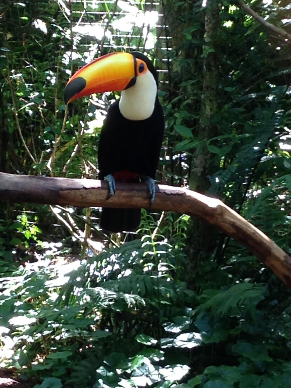 Parque-das-Aves-Reisebericht-Iguacu