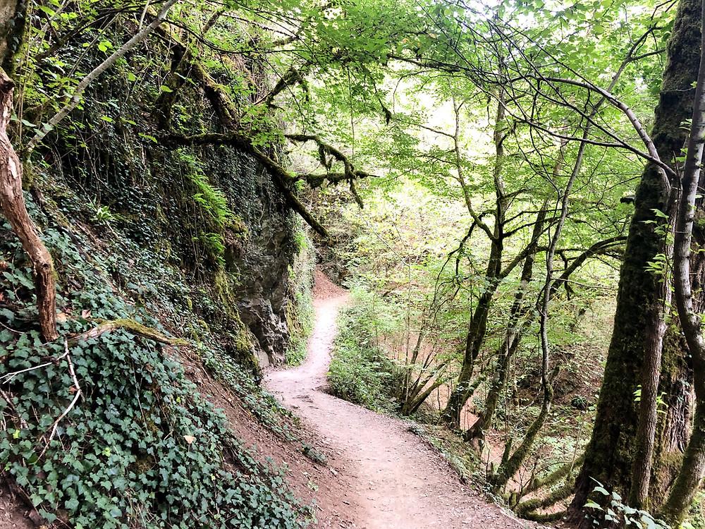 Wanderweg-Burg-Eltz-am-romantischen-Elzbach-hinauf-Ringelsteiner-Mühle