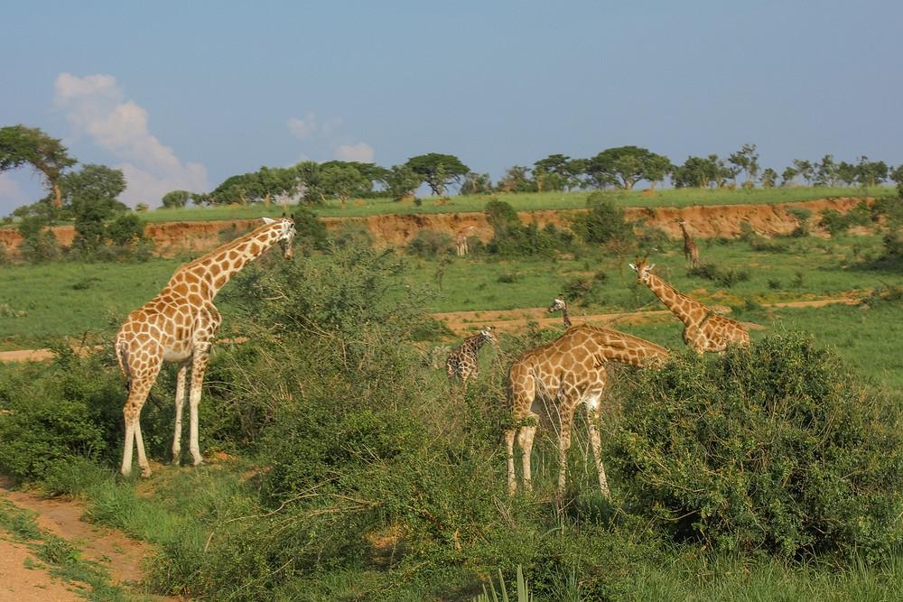 Safari-Uganda-Murchison-Falls
