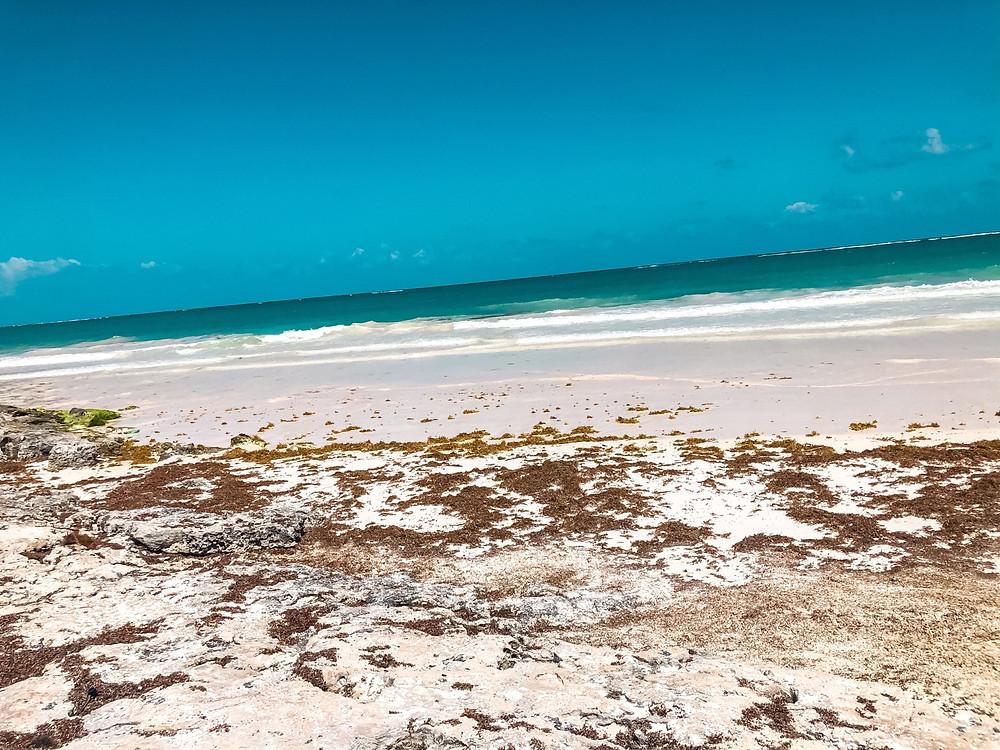 Tulum-Braunalgen-sehenswertes-strand-playa-paraiso