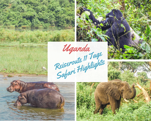 Uganda-Reiseroute-Safari-Gorilla