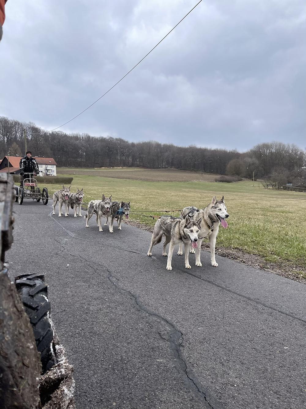 Husky-Wagenfahrt-Deutschland-Tipps-Reisebericht