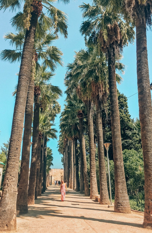 Fés-Marokko-Sehenswertes-Reisetipps-Reisebericht