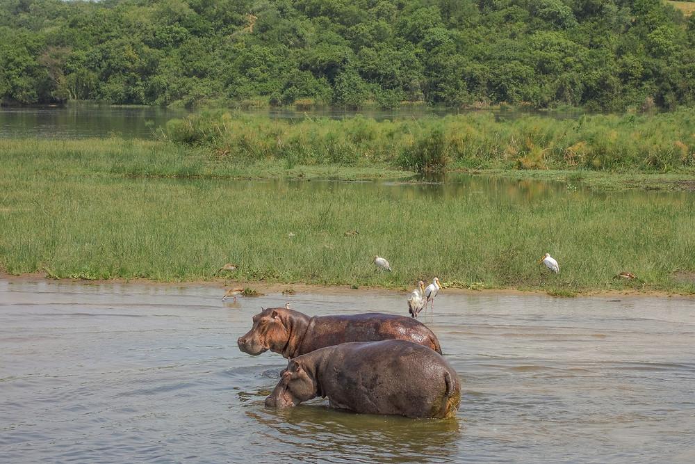 Uganda-Murchison-Falls-Safari-Reisebericht