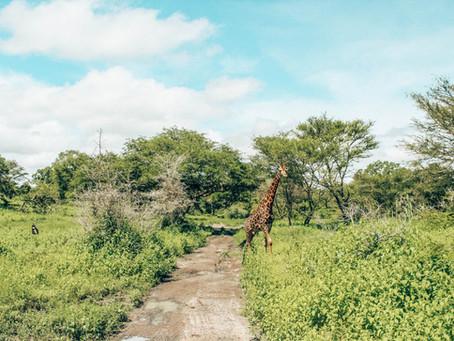 Fathala Reservat: Auf Safaritour in Senegal