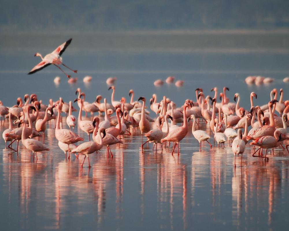 Tansania-Reisetipps-Urlaub-Highlights-Sehenswertes-Lake-Natron-Flamingos