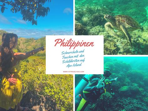 Philippinen: Schnorcheln und Tauchen mit den Schildkröten auf Apo Island