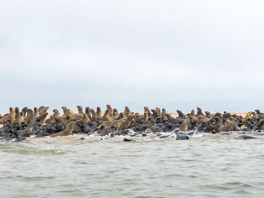 Namibia-walfischbucht-Robben-Kajak-walvis-Bay