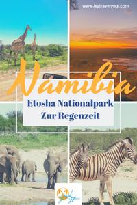 Etosha-Nationalpark-Reisebericht-Sebstfahrer-Regenzeit
