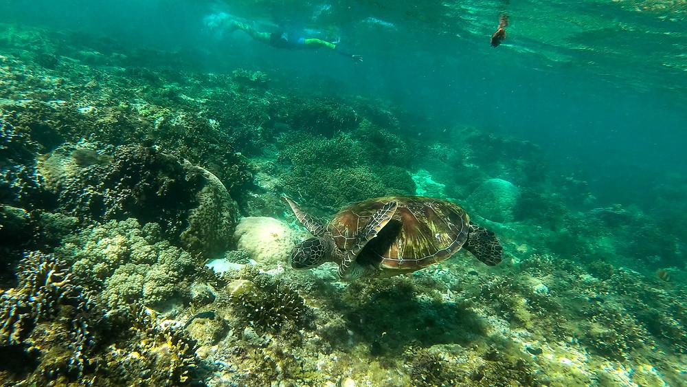 Apo-Island-Philippinen