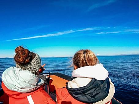 Kanada: unvergessliches Whale watching auf Vancouver Island