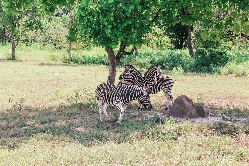 Senegal-Gambia-Urlaub-Safari-Reisebericht-Fathala-Reservat-Regenzeit-Tiere