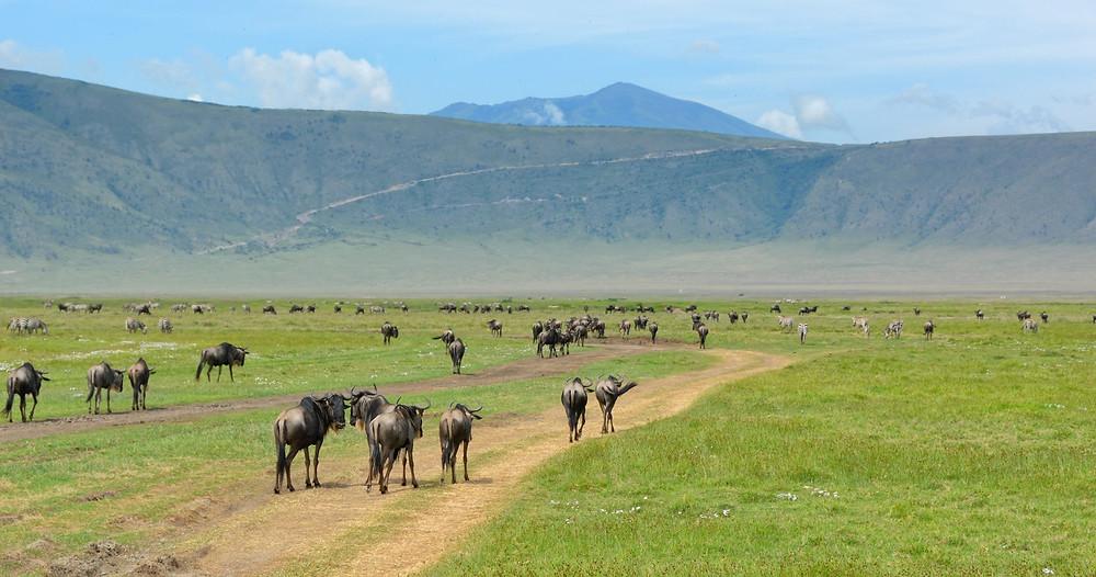 Ngorongoro-Krater-Tansania-urlaub-reisetipps-Highlights