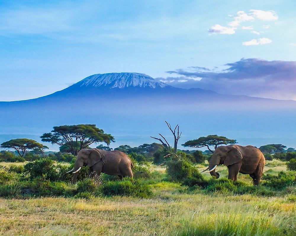 Tansania-Urlaub-sehenswertes-Highlights-reisetipps-Reiseplanung-safari