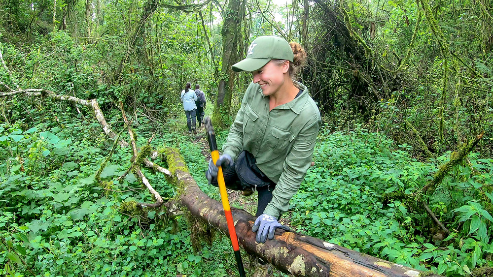 Uganda-Gorilla-Trekking-Kosten-Reisebericht-Erfahrungen