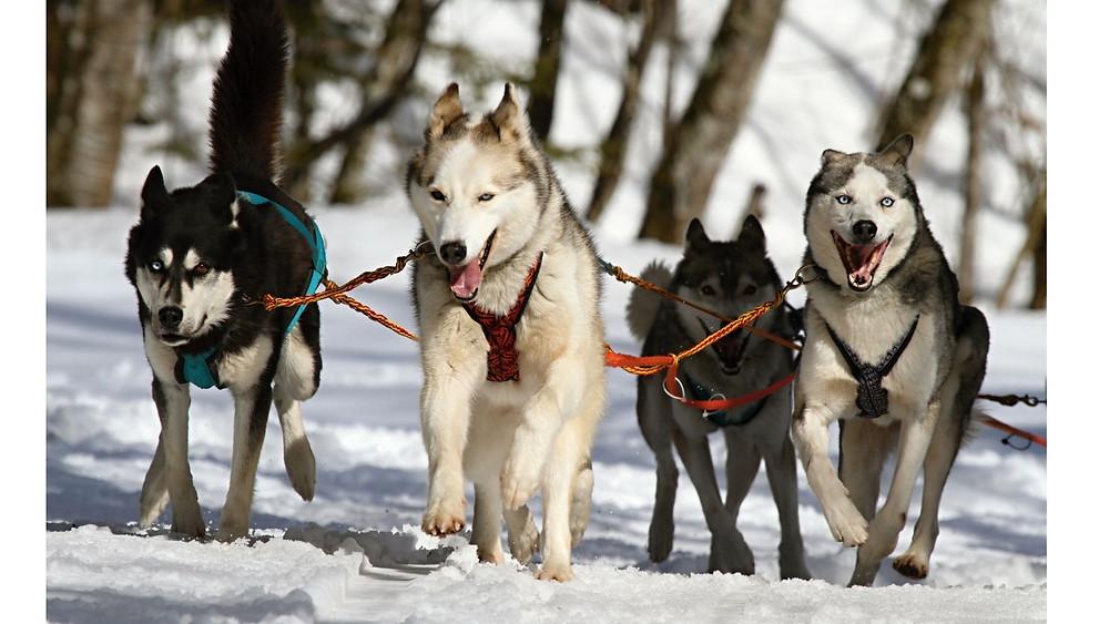 Hundeschlitten-Deutschland-Husky-Tour-Erfahrungen-Tipps