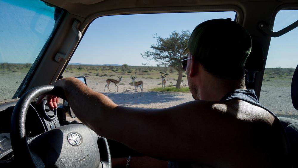 Etosha-Nationalpark-Namibia-Selbstfahrer-Camping-Regenzeit-Safari