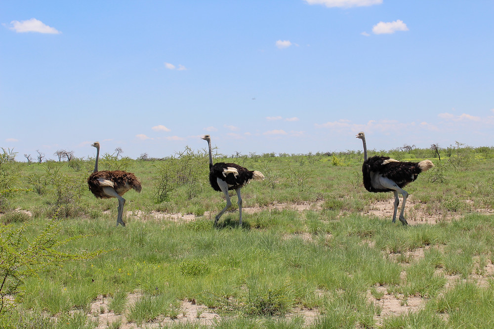 Etosha-Nationalpark-Selbstfahrer-Camping-Tiere-Regenzeit