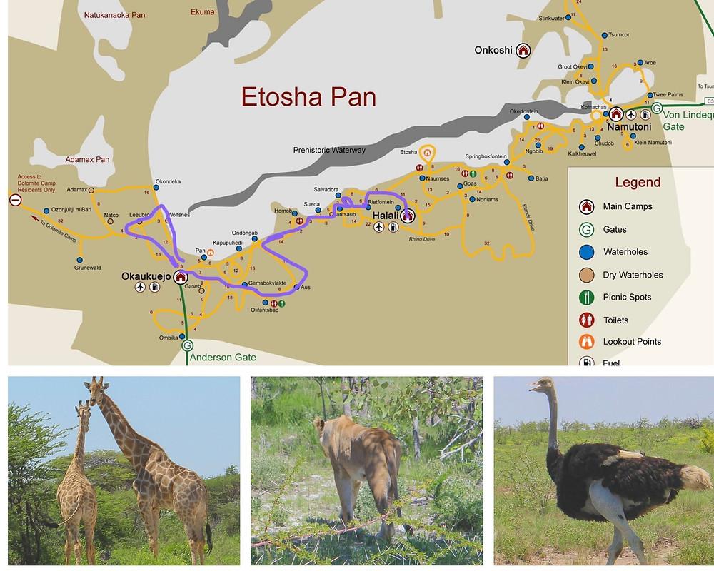 Etosha-Nationalpark-Namibia-Safari-Karte