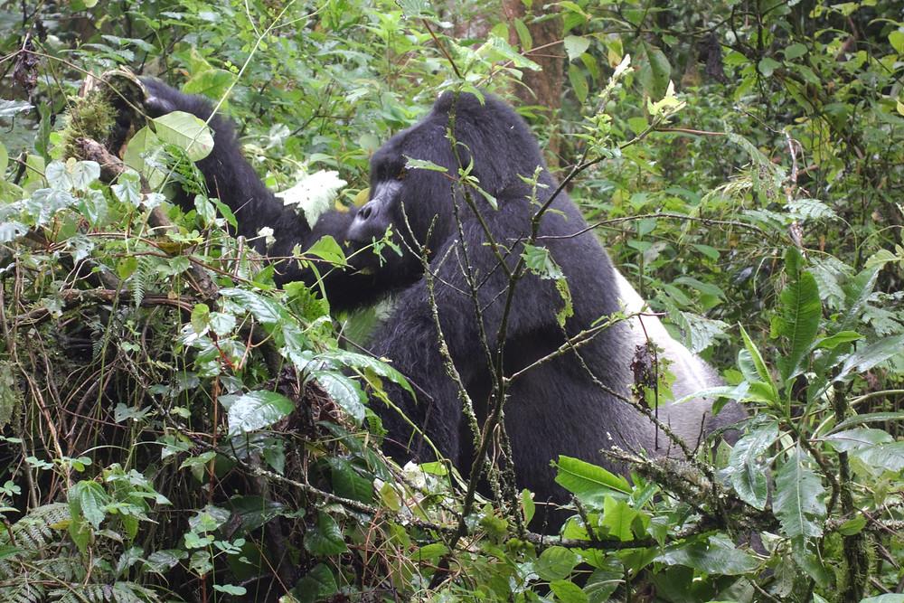 Safari-Afrika-Urlaub-rundreise-Tipps-Kleidung-Uganda