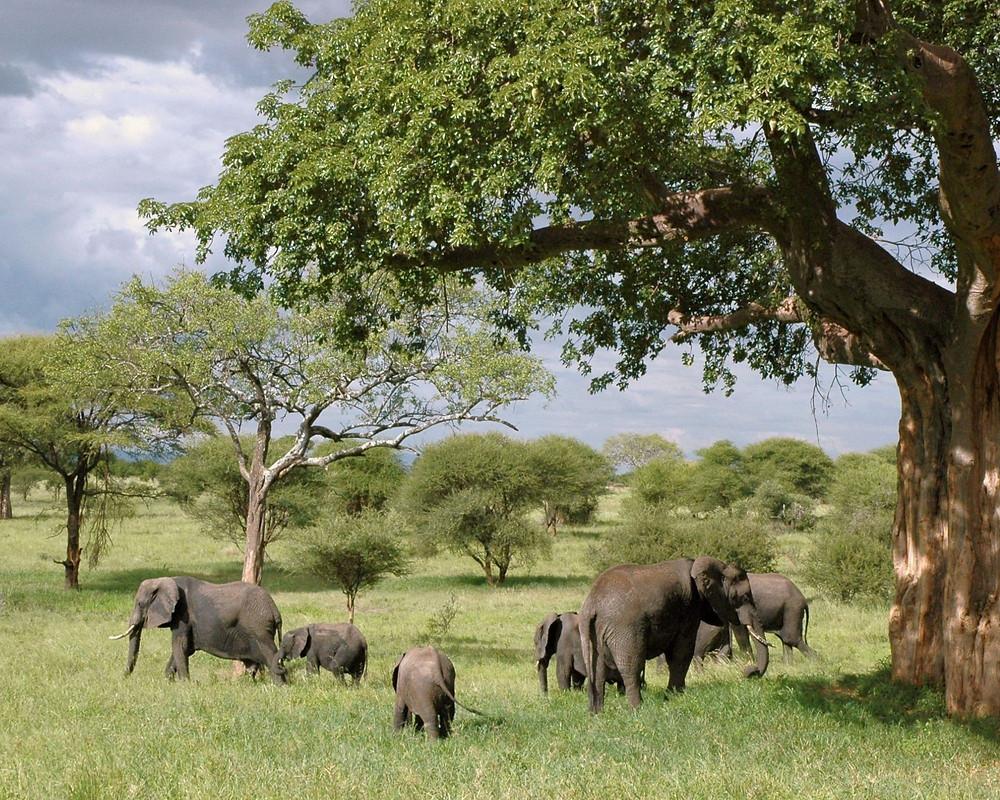 Tarangire-Nationalpark-Tansania-Urlaub-Highlights-Sehenswertes-Reisetipps