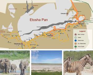 Etosha-Nationalpark-Namibia-Karte-Safari-Selbstfahrer-Camping-Regenzeit