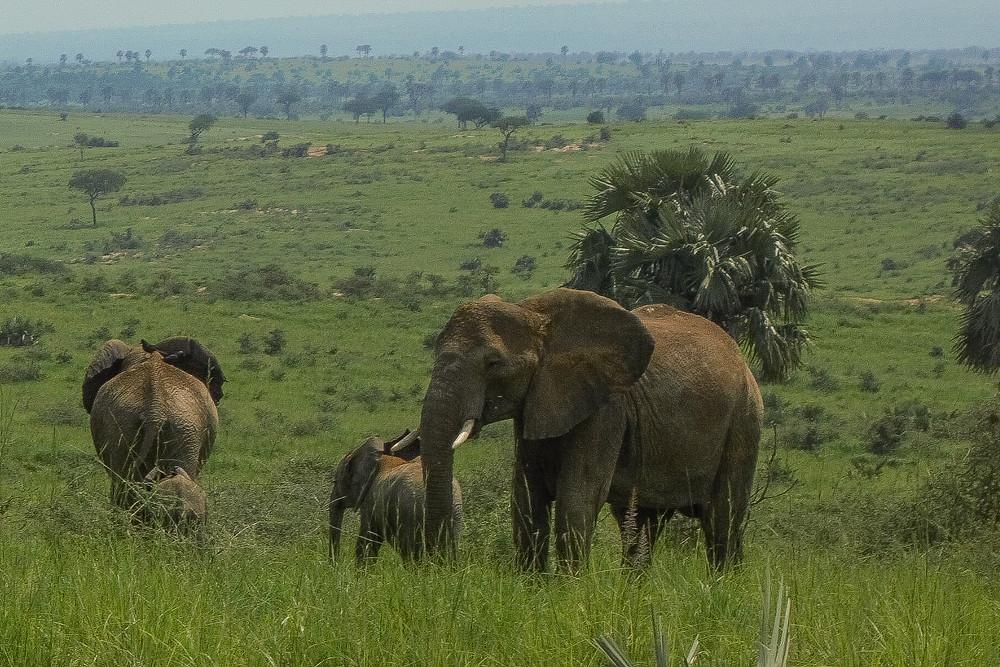 Uganda-safari-Reiseroute-Reiseblog