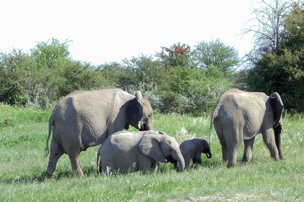 Safari-afrika-tipps-kleidung-was-muss-ich-wissen