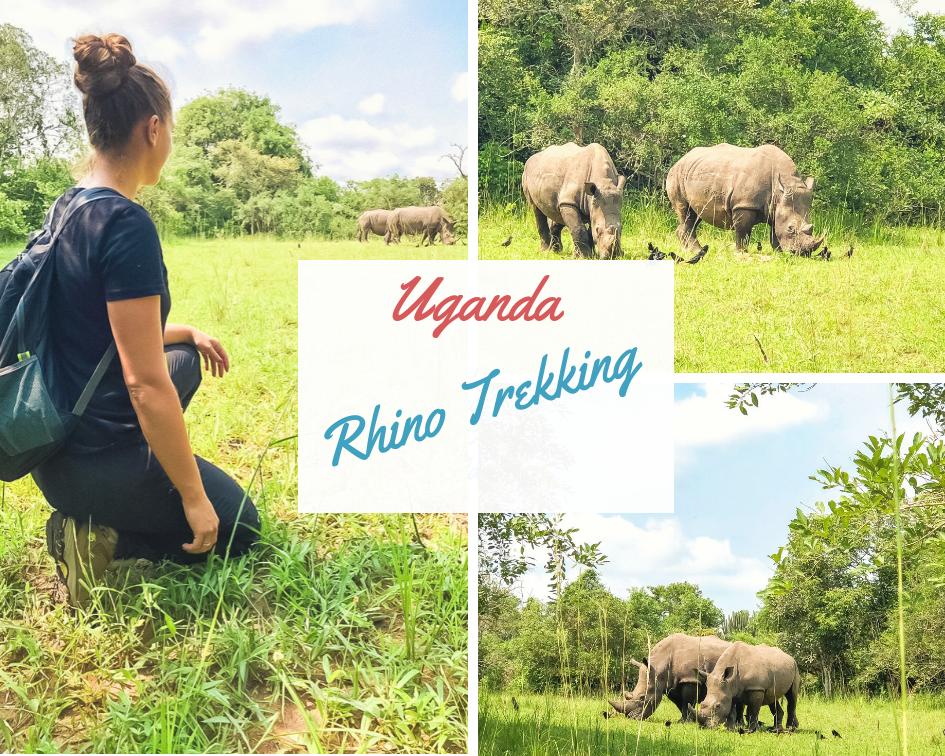 Uganda-Rhino-Sanctuary-Safari-Reisebericht