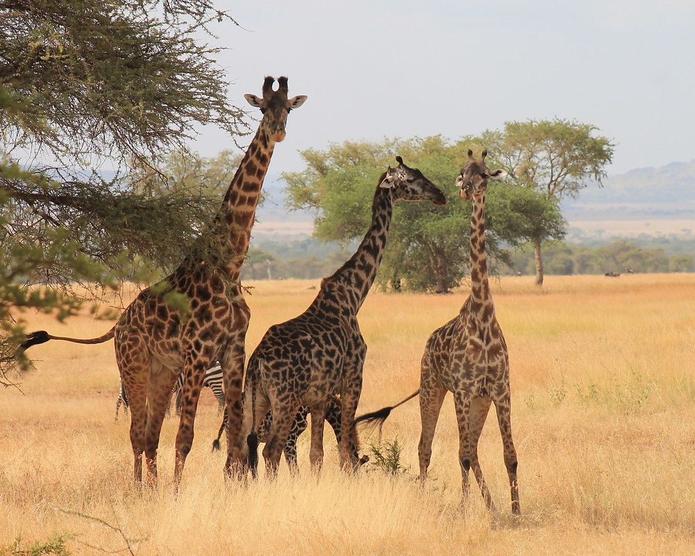 Tansania-safari-Serengeti-Nationalpark
