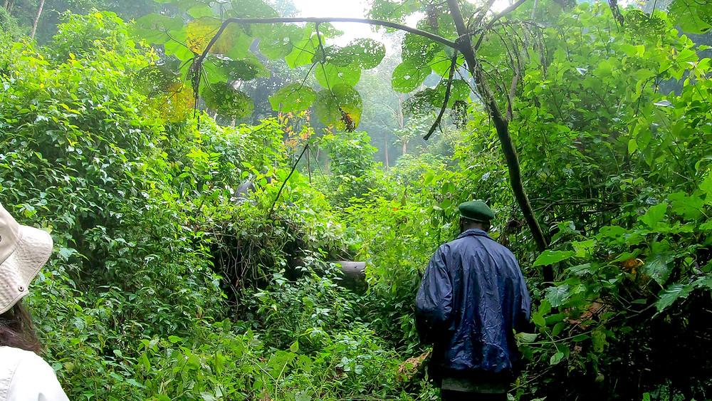 Uganda-Gorilla-Trekking-Kosten-Reisebericht-Regenwald-Kleidung