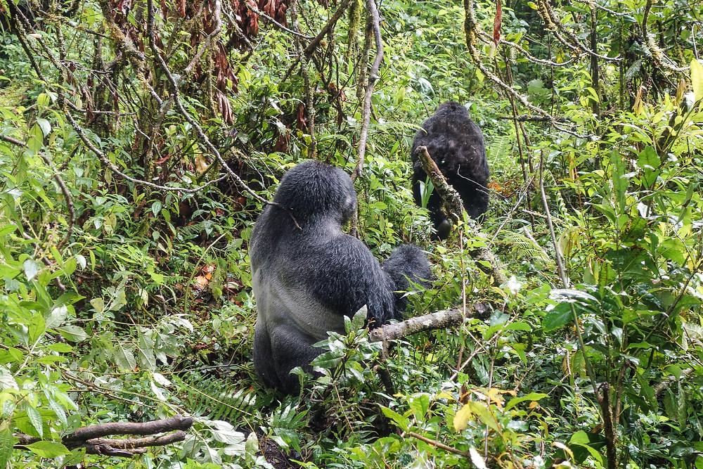 Uganda-Gorilla-Trekking-Kosten-Reisebericht-Kleidung