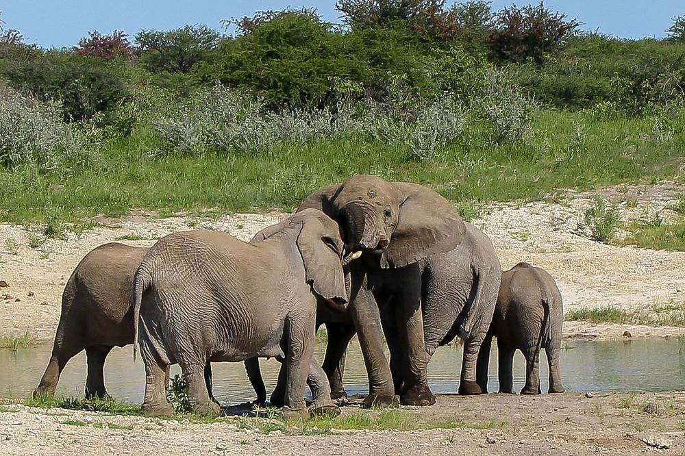 Etosha-Nationalpark-Namibia-Selbstfahrer-Safari-Elefanten--Regenzeit
