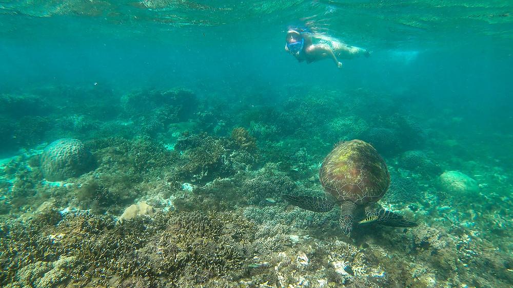 Apo-Island-Philippinen-Reisebericht-Tauchen-schnorcheln