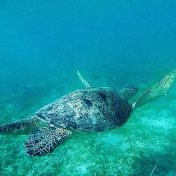 Nach dem wir in Thailand und Brasilien keine turtle 🐢 gefunden haben wurden wir in Madagaskar mehr